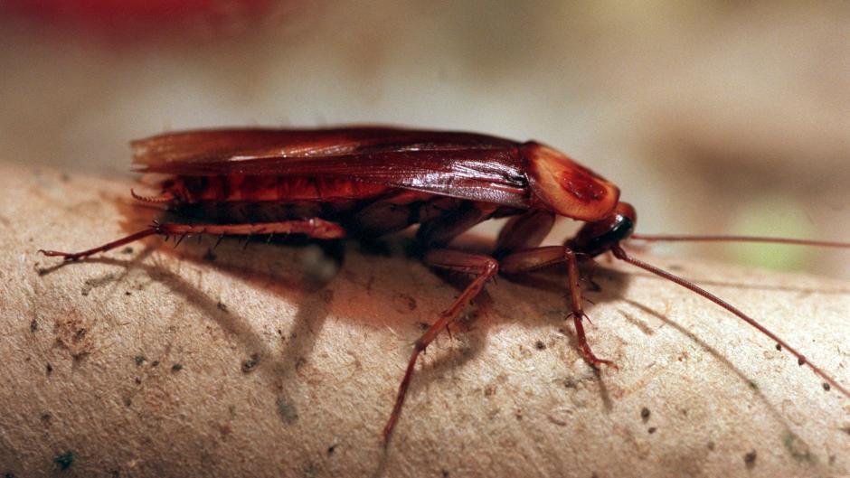 Insekten Lastig Welche Insekten Im Haus Sogar Nutzlich Sind Geld