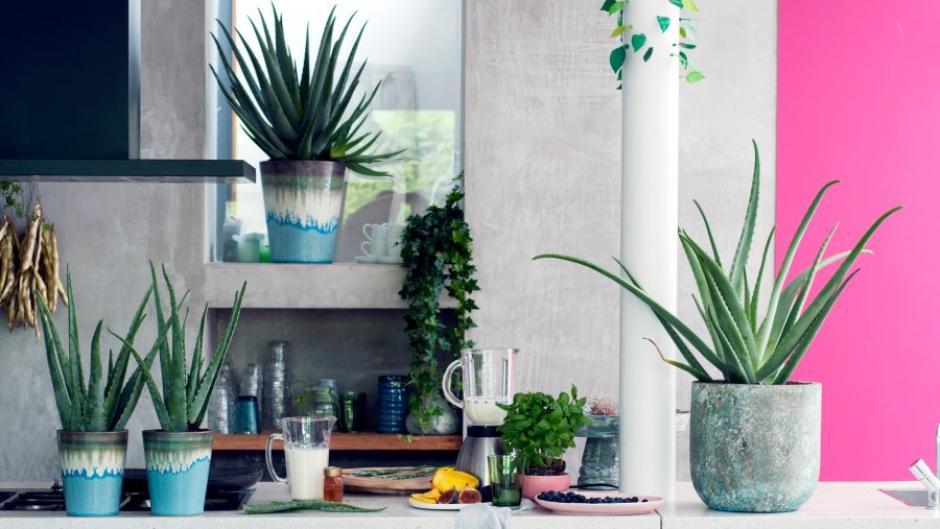 Trend: Diese Zimmerpflanzen sind besonders beliebt - Geld & Leben ...
