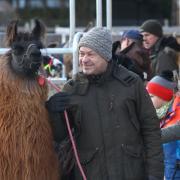 Illertissen - Buch - Lama - Ausritt mit Lamas