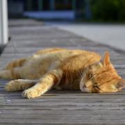 Cat Anita Schedler.jpg