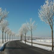 Die Allee zwischen Bergheim und Inningen ist zu jeder Jahreszeit schön anzusehen.