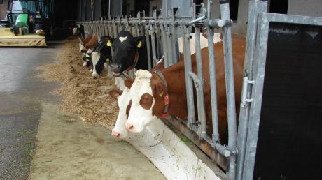 Gesunde Kühe brauchen einwandfreies Futter. Hundekot darin ist nicht nur unappetitlich, sondern sogar recht gefährlich.