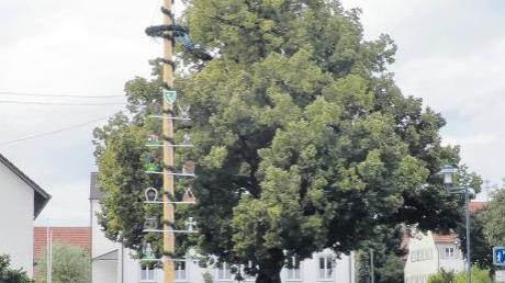 """Der Landkreis Günzburg veranstaltet einen Wettbewerb: """"Bäume unserer Heimat"""" Die Gemeinde Breitenthal wird sich daran beteiligen und die Dorflinde in Nattenhausen vorschlagen."""