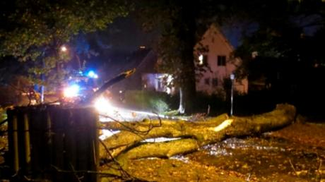 Ein umgestürzter Baum verursachte einen Unfall.