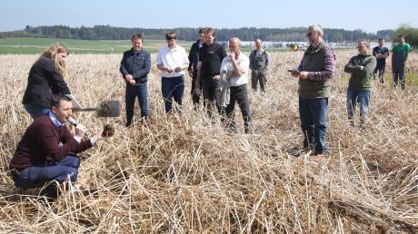 Kein Widerspruch: Zwischenfrüchte stabilisieren das Bodengefüge und lockern den Boden. Das konnten sich interessierte Landwirte nahe Ellzee direkt auf dem Feld ansehen.
