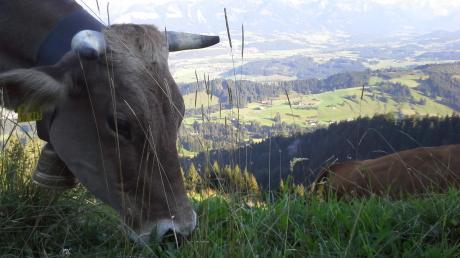 Schon öfter hat Bettina Riedele ein paar Tage in den Bergen verbracht, dabei ist auch dieses Bild entstanden. Zum ersten Mal in ihrem Leben bleibt sie nun den ganzen Sommer über auf der Alpe Bärenschwand.