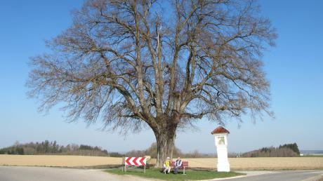 Markantes Kulturdenkmal: Linde und Bildstock mit Blick ins .