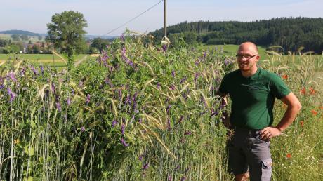 Die Pflanzenmischung von Andreas Liebhaber macht optisch etwas her – das farbenfrohe Feld ist ein ungewöhnlicher, aber schöner Anblick. Die Pflanzen verarbeitet der Bio-Landwirt zum Futter für seine Tiere.