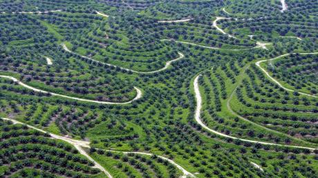 Eine Luftaufnahme zeigt Palmöl-Plantagen in Indonesien. Das in Nahrungsmitteln und Kosmetik verwendete Palmöl hat verheerende Folgen für die Artenvielfalt. Frank Nierula sprach bei seiner Lesung in Krumbach die Probleme, die ihr Anbau mitbringt an.