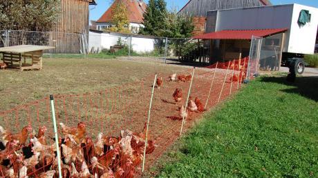 Ein fahrbarer Stall, ein überdachter Vorbereich und eine Wiese, die regelmäßig gewechselt wird, das ist das Prinzip der mobilen Hühnerhaltung der Familie Rampp-Simlacher in Aletshausen.