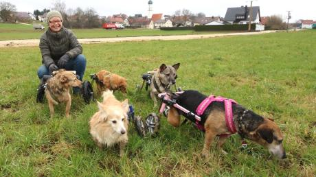 Daniela Müller-Martin zusammen mit Amal, Florika, Ronya, Fortuna und Hope beim täglichen Spaziergang. Obwohl sich die Hunde nur mit einem Rollstuhl fortbewegen können, verbringen sie auf dem Gnadenhof ein glückliches Leben.