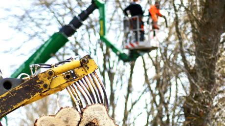 Wegen Baumfällarbeiten muss die Staatsstraße 2025 zwischen Thannhausen und Münsterhausen gesperrt werden.