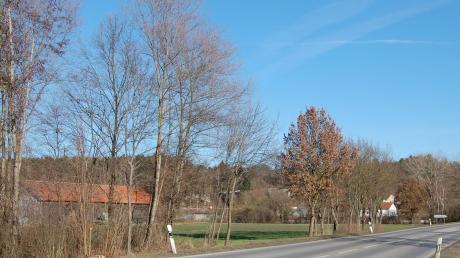 """Vor der Baumgruppe links von der Straße könnte künftig die Erschließungsstraße für das Gewerbegebiet """"Thannhausen Nord"""" von der B-300-Umfahrung abzweigen. Hier soll vorsorglich eine Abbiegespur angelegt werden."""