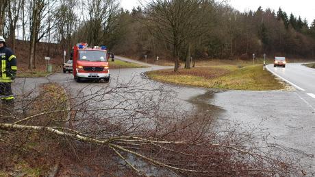Über den Radweg am Bleicher Berg gestürzt ist eine Birke am Montag. Die Feuerwehr Deisenhausen räumte sie wieder weg.