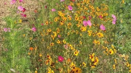 """Das Volksbegehren """"Artenvielfalt & Naturschönheit in Bayern"""" sorgte 2019 für großes Aufsehen. Der Slogan """"Rettet die Bienen"""" hatte entscheidenden Anteil am Erfolg."""
