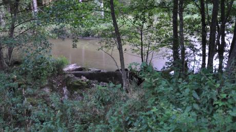 Auf staatlichen Grund im Unterroggenburger Forst baut die Gemeinde Wiesenbach einen Hochwasserschutzdamm.
