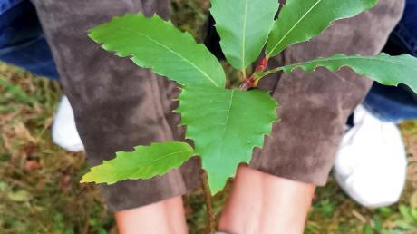 In Edelstetten fand eine Info-Veranstaltung für Waldbesitzer statt.