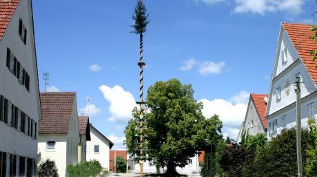 Die Friedenslinde, mit einem Stammumfang von 5,60 Metern an der dicksten Stelle, ist seit 150 Jahren Mittelpunkt der Günztalgemeinde Nattenhausen.