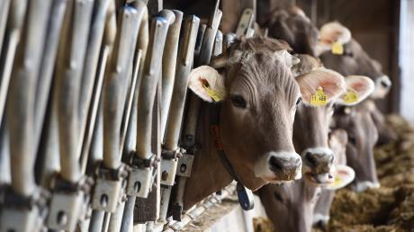 Kühe geben weiter Milch, doch der Absatz hat sich deutlich verschoben.