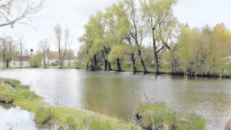 Idyllisch sieht der Weiher am Rand von Steinebach aus. Der Eigentümer will dieses Bild bewahrt wissen und wehrt sich mittels Petition gegen die von seinem Nachbarn geplante Biogasanlage in Sichtweite (hinter den Bäumen am Ufer).