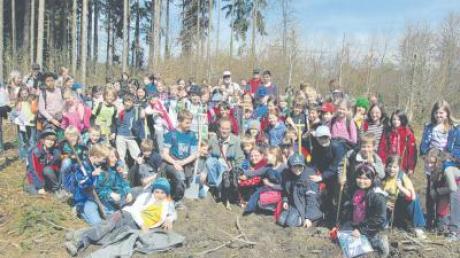 Mit vielen Händen gelingt es, an einem Vormittag 400 Buchen zu setzen: Die Geltendorfer Schüler und Förster Andreas Brem waren im Wald am Geltendorfer Heuweg wieder fleißig.
