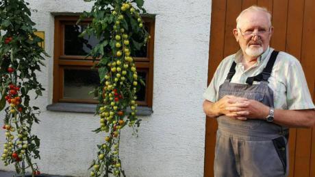 Karl Heinz Zürch vor seinen reifenden Tomaten an der Südseite seines Anwesens.