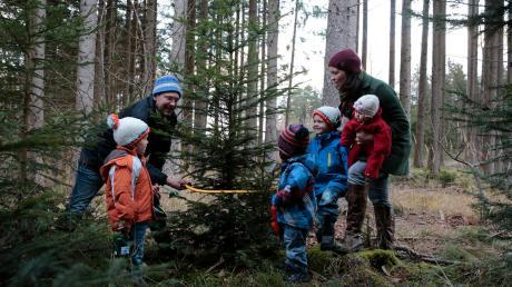 Georg Kölbl sucht sich mit seiner Familie im eigenen Apfeldorfer Wald den Christbaum aus. Im Bild sind Papa Georg Kölbl, Hannes, Franz, Georg, Klara und Ulrike Kölbl zu sehen.