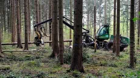 Dort wo Bäume geerntet werden, soll auch möglichst bald wieder Wald nachwachsen.
