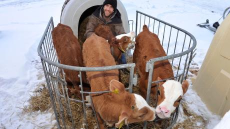 Für das Foto kuscheln sich die Vierlings-Kälber von Landwirt Michael Beinhofer aus Apfeldorf zusammen.