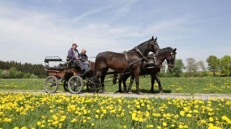 Bei einem Unfall mit einer Pferdkutsche in Fuchstal ist ein Mann leicht verletzt worden.