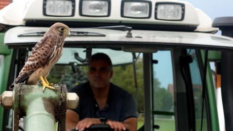 Ein junger Falke ruht sich auf dem Frontlader des Bulldogs aus.