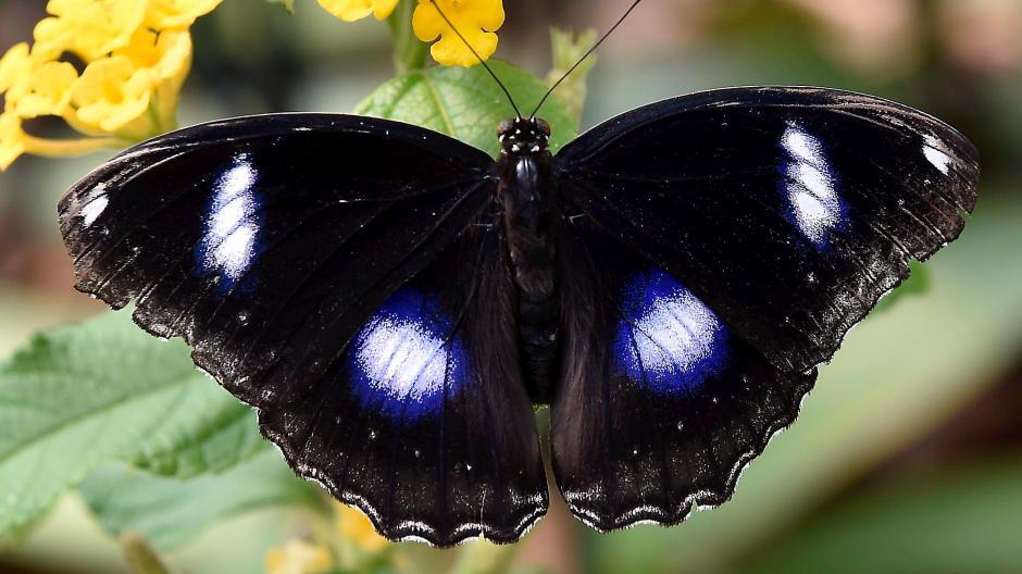 Hechenwang Bio Obst Für Die Schmetterlinge In Hechenwang