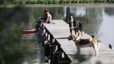 Der Egelsee zwischen Hofsteten und Hagenheim ist auch bei Hunden ein beliebtes Badegewässer. Weil einige Tiere Wasservögel, Bodenbrüter und Jungwild jagen, hat die Gemeinde jetzt eine Leinenpflicht für große Hunde erlassen.