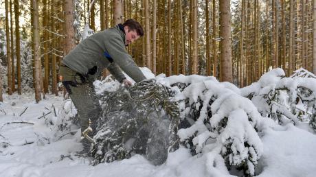 Michael Rampp ist der neue Leiter des Forstreviers Türkenfeld. Dazu gehören auch Waldflächen rund um neun Gemeinden im nördlichen Landkreis Landsberg. Der Förster empfiehlt, abgebrochene Baumkronen möglichst schnell aus den Wäldern herauszuholen.