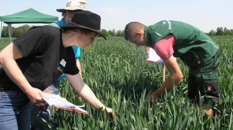 Vielfältige Aufgaben standen bei den Teilnehmern des Bundeswettbewerbs der Landjugend auf dem Programm, der auch im Landkreis stattfand: Pflanzenbestimmung.
