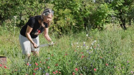 LT-Redakteurin Stephanie Millonig in ihren Garten zwischen den Blumen bei Insektenzählen: Der Naturschutzbund Deutschland und der Landesbund für Vogelschutz haben wieder zu der Zählaktion Insektensommer aufgerufen.