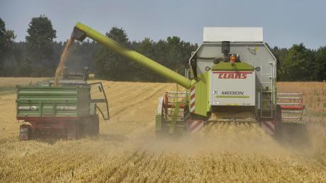 Die meisten Getreidefelder im Landkreis Landsberg sind mittlerweile abgeerntet. Unser Foto entstand bei der Ernte eines Dinkelfelds von BBV-Kreisobmann Johann Drexl bei Kaufering.