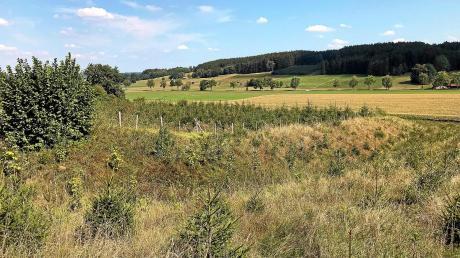Die keltische Viereckschanze von Leeder, die derzeit noch von Jungfichten bewachsen ist, soll als Bodendenkmal besser erkennbar werden.
