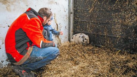 GeorgKaindl und Sohn Jakob schauen nach, wie es dem Minischwein geht. Es wurde Anfang der Woche bei Pürgen gefangen und kam auf dem Kaindl-Hof unter.Der Bauer suchteine neue Bleibe für das Tier.