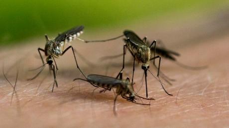 Was tun gegen die Mückenplage? In Eching fand deswegen ein Bürgerentscheid statt.
