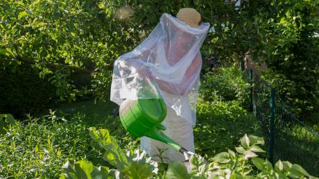"""Mückenplage am Ammersee: Viele Bewohner tragen im Sommer im Freien """"Schutzkleidung""""."""