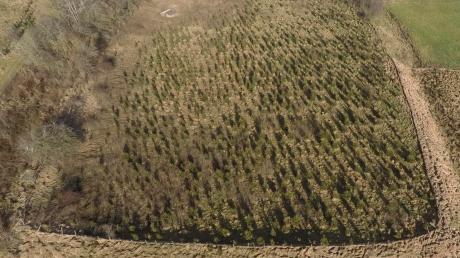Das Luftbild zeigt die Keltenschanze im Aschthal bei Leeder mit der Fichtenbepflanzung. Dort stehen rund 700 Bäume, die nun teilweise zu Christbäumen werden sollen.