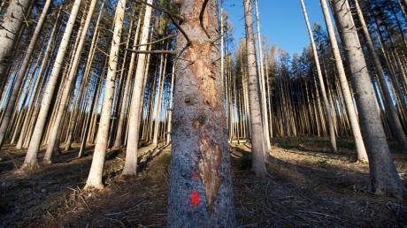 Viele Wälder im südlichen Landkreis Landsberg sind durch den Hagel am Pfingstmontag beschädigt worden.