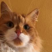 Auch die Katze Findus der Familie Ulm aus Igling war unter den Opfern.