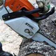 Einen seltsamen Fall von Vandalismus untersucht die Polizei in Königsbrunn: Jemand ist in einen Kleingarten eingestiegen und hat einen Baum umgesägt.