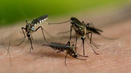 In den Sommermonaten werden die Bewohner der Gemeinde Eching am Ammersee immer wieder von Mücken geplagt.