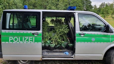 Bei der Polizeiinspektion Herrsching gingen in den vergangenen Tagen zwei Meldungen über Marihuana-Pflanzen ein.