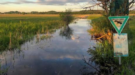 Die Überflutung dieses Grabens im Ampermoos ist weniger das Ergebnis eines Aufstaus als vielmehr das einer Überschwemmung nach längerem Regen.