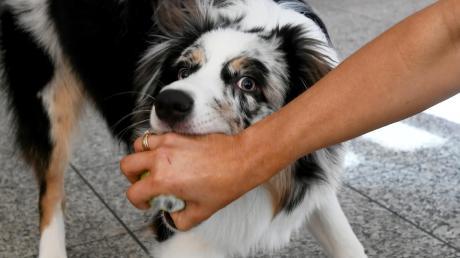 Ein frei herumlaufender Hund hat auf einem Spielplatz in Kleinkötz Kinder angesprungen. Die Mutter stellt sich schützend vor ihre Kinder und wird von dem Hund gebissen.