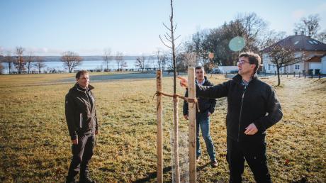 Auch auf den Selzamweiden wurden in Utting Elsbeeren gepflanzt. Bürgermeister Florian Hoffmann (Mitte) sowie Tilo Scholze (links) und Erwin Schmid vom Amt für Ernährung, Landwirtschaft und Forsten schauen sich die Bäume an.